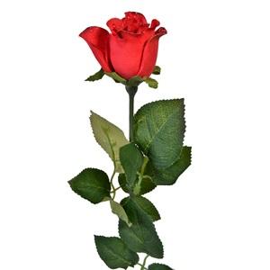 Rose Red 63 cm