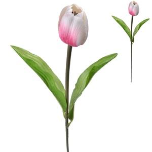 Tulip Cream / Roz 52 cm